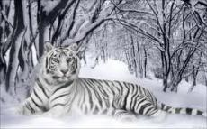 snow princess chapter8