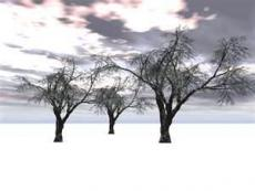 Winter Depression
