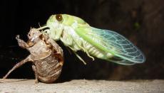 The Sound of Cicadas(Edited)