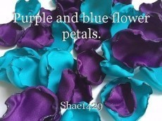 Purple and blue flower petals.