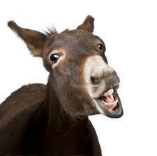 And the Donkey Spoke...