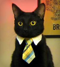 Cat Faculty!
