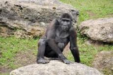 monkeys in the zoo (haiku)