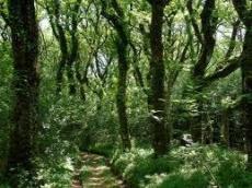 Wandering (free verse)