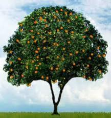 The Orange Tree-A Short Story