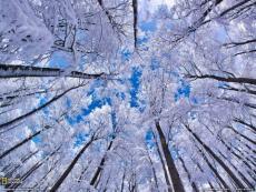 Snow Flakes Round
