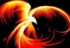 Phoenix EVO