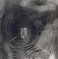 Spiders Web Skills
