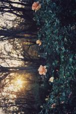 Flower garden soulx