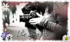 Life of a Flower