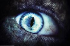 The Beast Within - Heidi Cooper