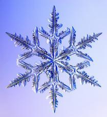 Much more Frozen