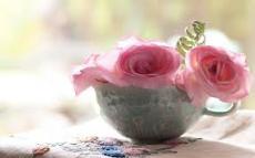 Rose Filling Cups