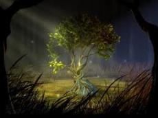 My Wishing Tree