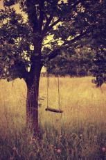 Juniper's Wood