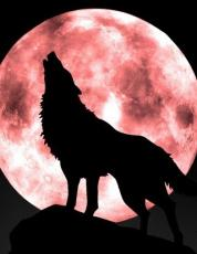 Howl to the Moon (Poem of a wolf)