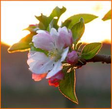 Spring's Return