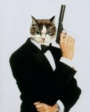 The Cat with the Golden Gun
