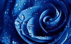 Blue Velvet Story