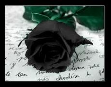 When Rose Petals Fall