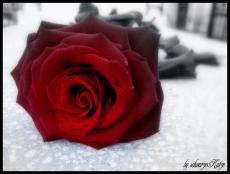 Roses from Hades