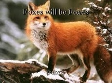 Foxes will be Foxes