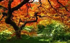 Vivid Glories of Autumn