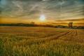Haiku Farming