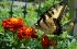 Confessions Of A Guerilla Gardener