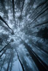 The Light beneath the Wilderness
