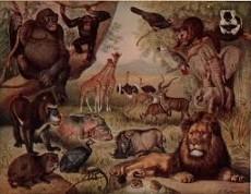 The Animal Bible