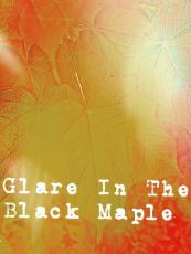 Glare In The Black Maple