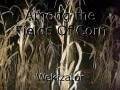 Among the Fields Of Corn