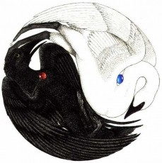 Swan and Crow