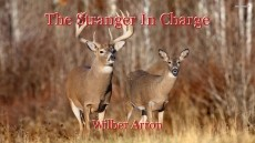 The Stranger In Charge