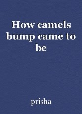 How camels bump came to be