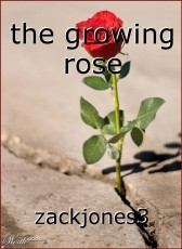 the growing rose