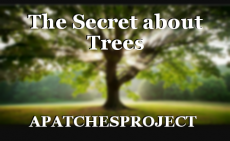 The Secret about Trees
