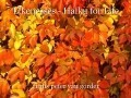 Likenesses - Haiku for Life