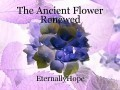 The Ancient Flower Renewed