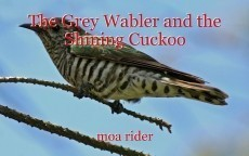 The Grey Wabler and the Shining Cuckoo