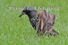 Strange Bird Behaviour