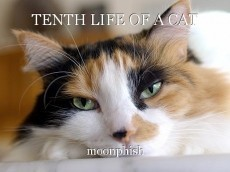 TENTH LIFE OF A CAT
