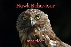 Hawk Behaviour