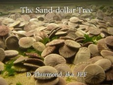 The Sand-dollar Tree