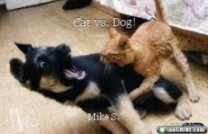 Cat vs. Dog!