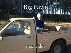 Big Fawn