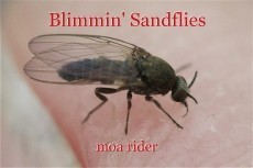 Blimmin' Sandflies
