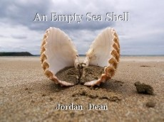 An Empty Sea Shell