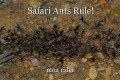 Safari Ants Rule!